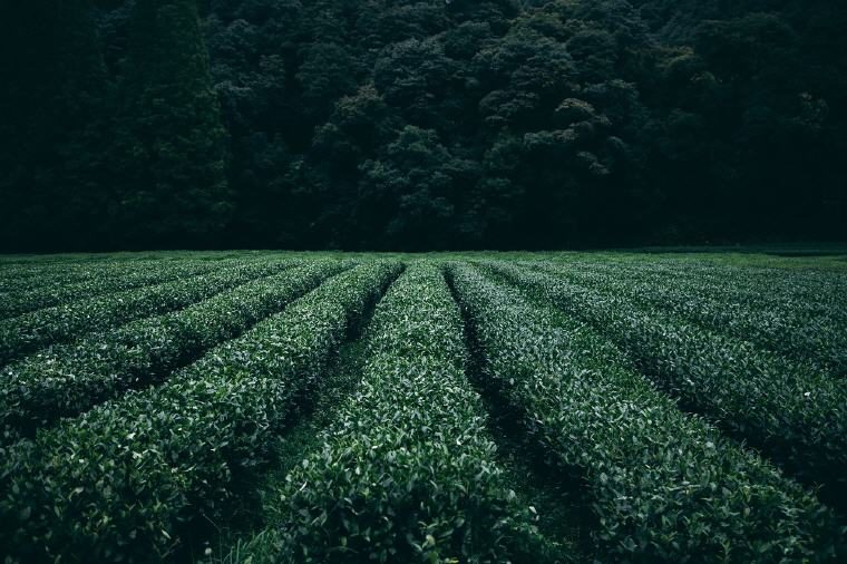 You never plow a field by turning it over in your mind. You have to put your hands to the handles of the plow and walk forward. Gordon B. Hinckley